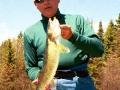 Bob - 24 inch Walleye