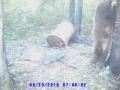 normal_Bearhunts1