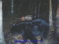 normal_Beaver995