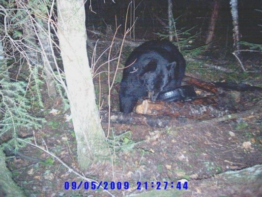 normal_Trail cam-1
