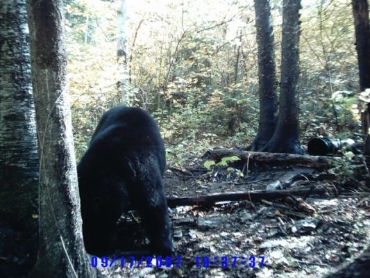 normal_Trail cam-11