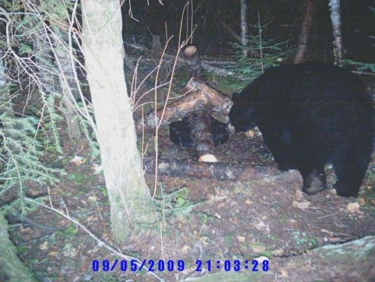normal_Trail cam-2~0