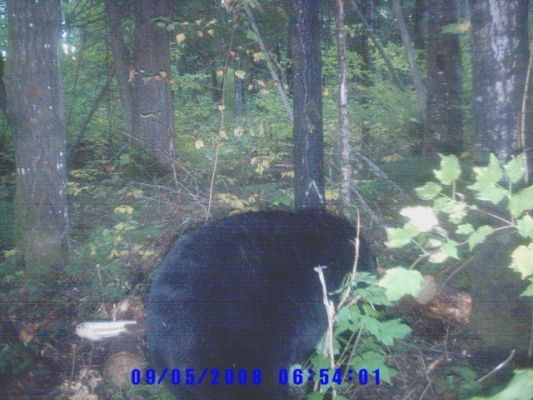 normal_Trail cam-7