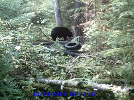 normal_Trail cam-8