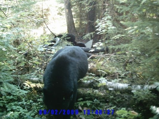 normal_Trail cam-9